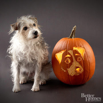 Freckles the Dog and BHG Pumpkin Carving Stencil