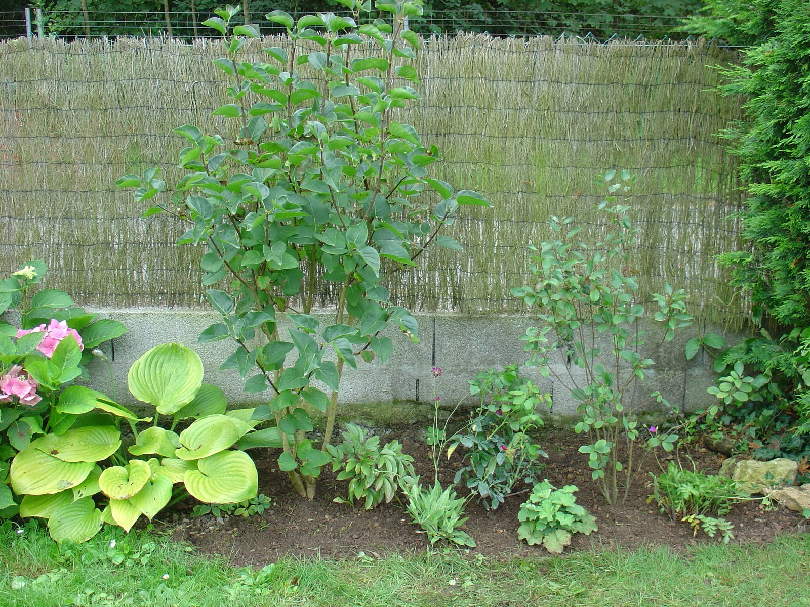On verra au jardin une envie de mixed border for Jardin anglais mixed border