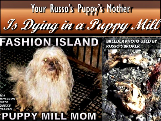 Your Russo's Mother