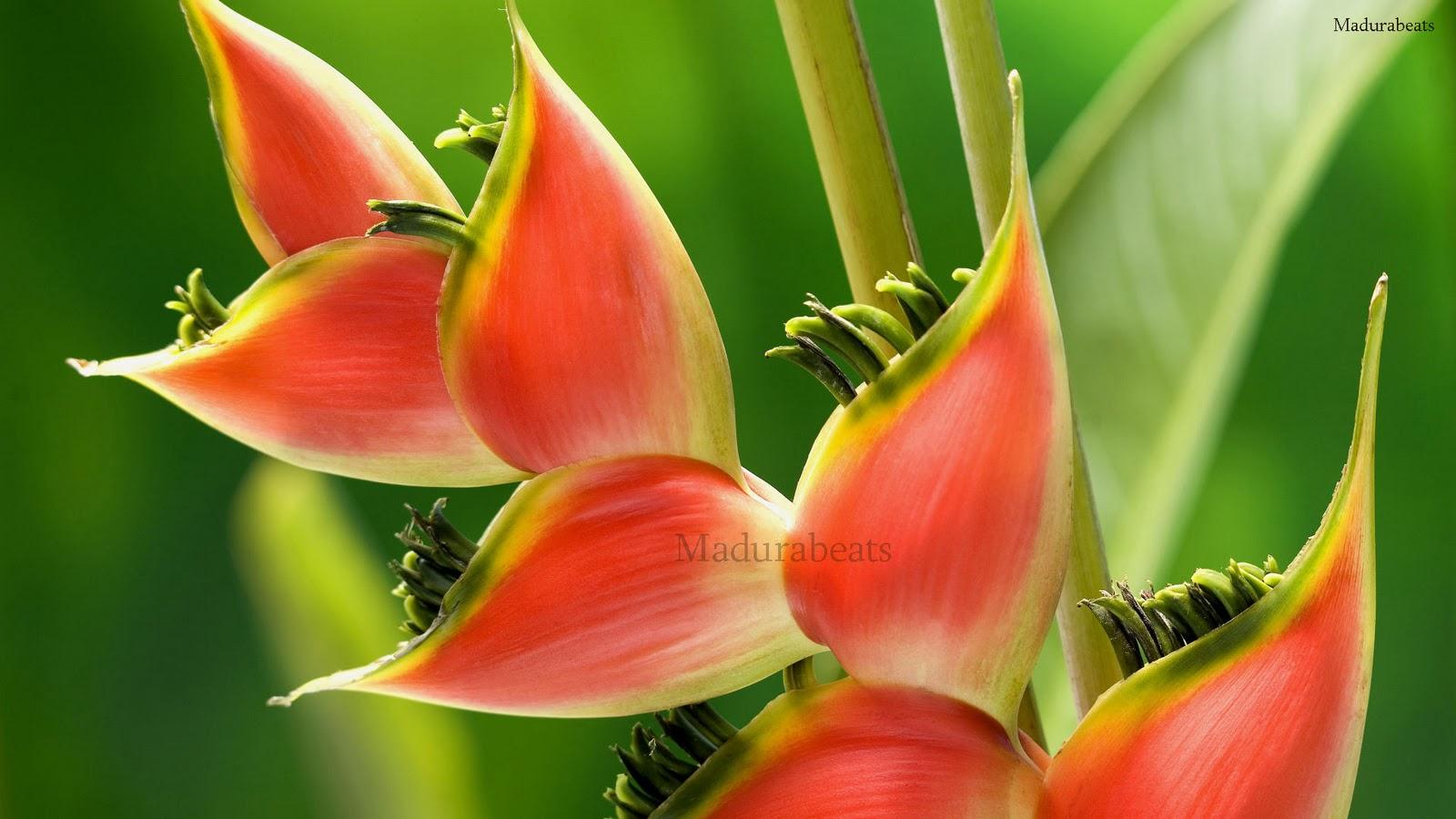 Flower images, Wide screen wallpapers,fresh flowers,Beautiful flowers,Tillandsia_Green_Background_hd_wallpaper