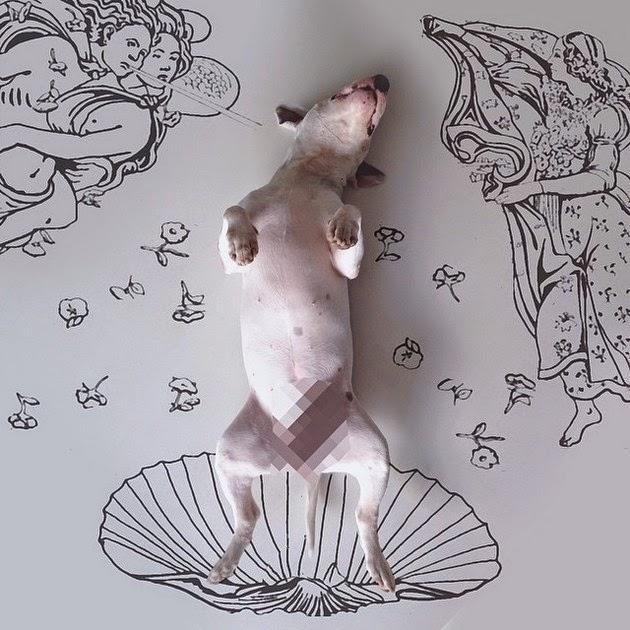 funny-bull-terrier-3
