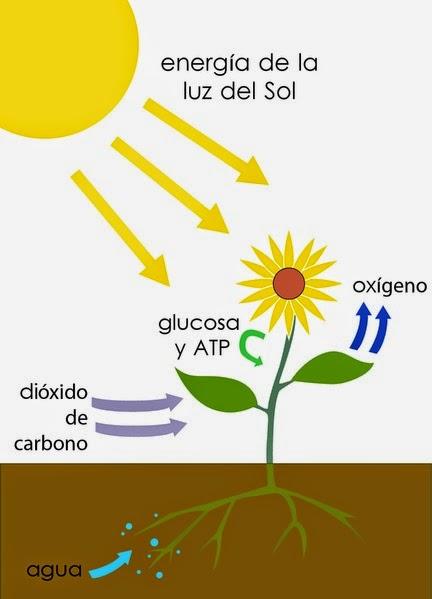 Apa Sebenarnya Pengertian Fotosintesis pada Tanaman itu?