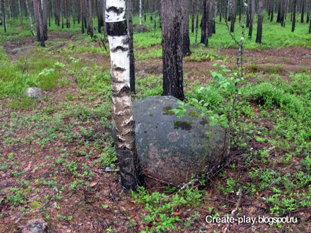 лес Ленинградская область