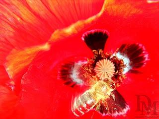 Opalizujące kwiaty mają większe powodzenie u owadów fot. Dariusz Małanowski