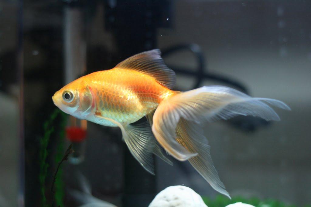 Funny tropical aquarium fish Funny Animal