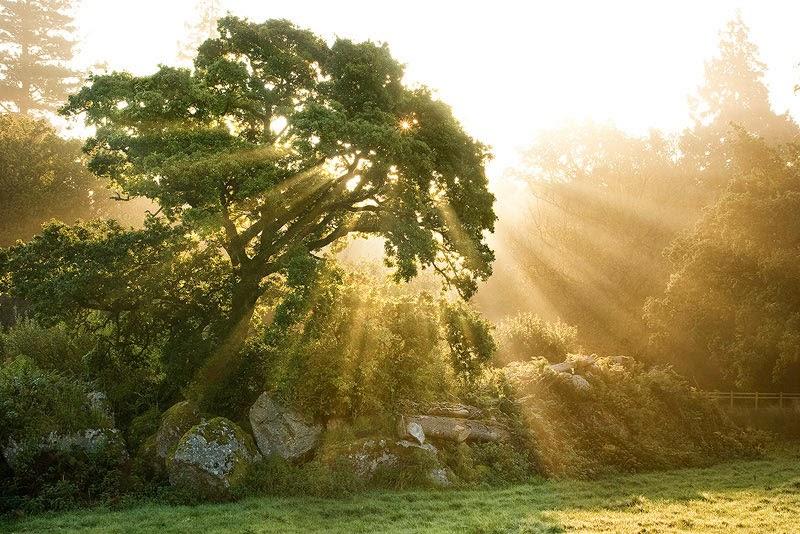 Gambar Pohon Cahaya Matahari Pagi Wallpaper Pemandangan Alam Indah