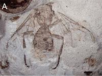 https://3.bp.blogspot.com/-d4SjLcqBjZE/VlJPeDU_oGI/AAAAAAAAmDc/3WgUBUZiPoc/s1600/Archaeohelorus%252Bpolyneurus%252B1.JPG
