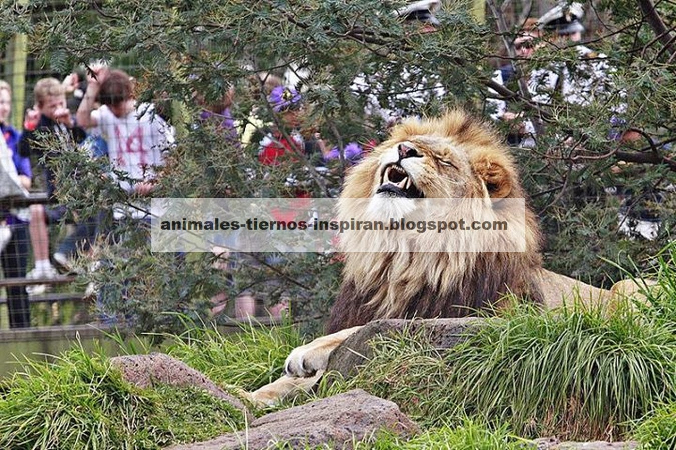 Animales Tiernos Inspiran: impactantes imagenes de leones
