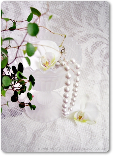 vit orkidé, vit palaenopsis orkide, white orchid, white palaenopsis orchid, ittala skål blommor, ittala bowl flowers