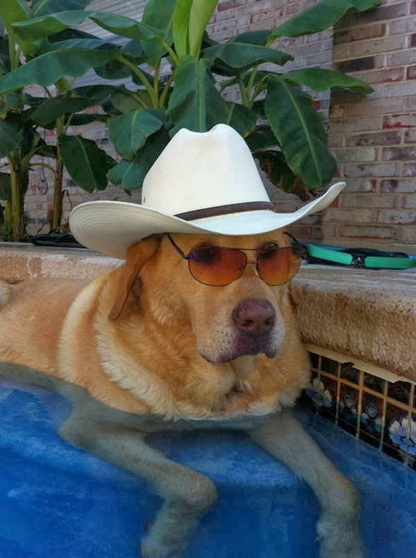 Cute dogs (50 pics), dog pictures, dog wears glasses and cowboy hat
