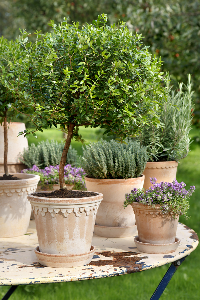 1000 Images About Container Garden On Pinterest