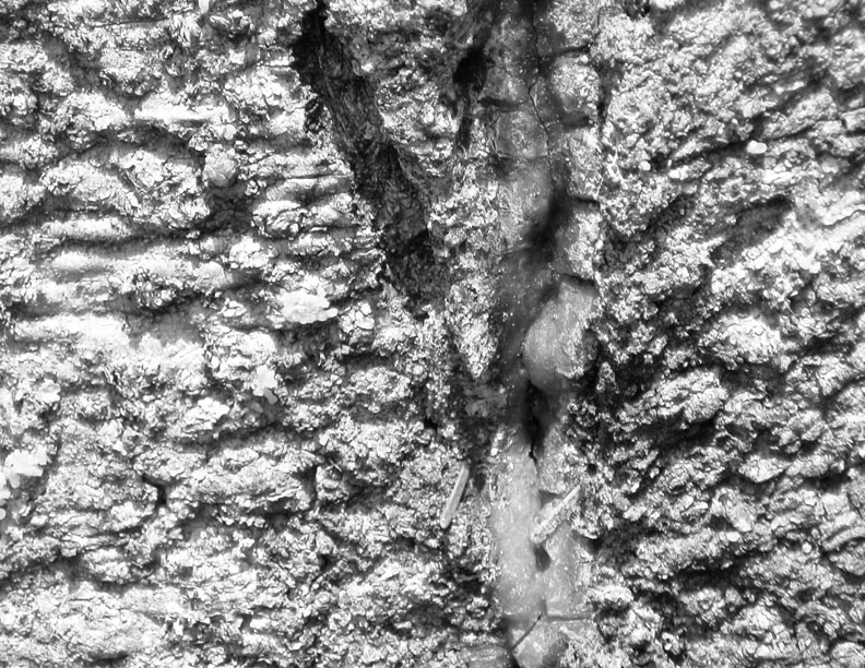 Tree Bark - Texture Photograph