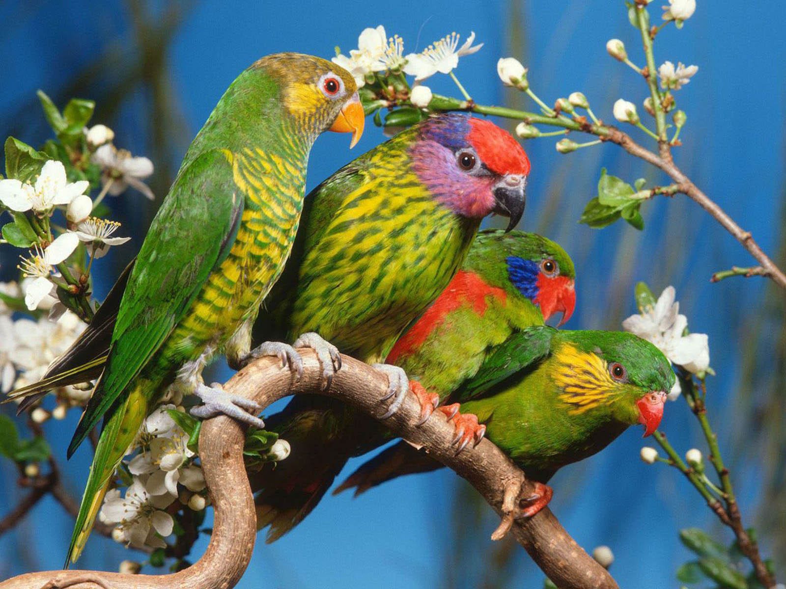 wallpapers love birds desktop wallpapers