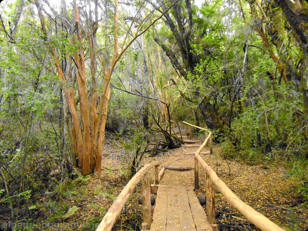 sendero Pitranto Grande, Lago Puelo, patagonia, senda, sendero