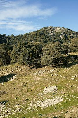 Majanos en el camino del Albarracín