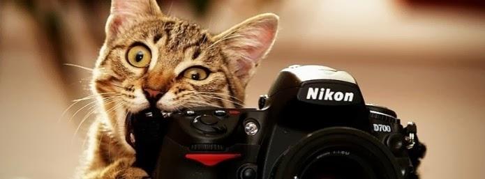 كيف تلتقط صورة تعجبك من أي الفيديو