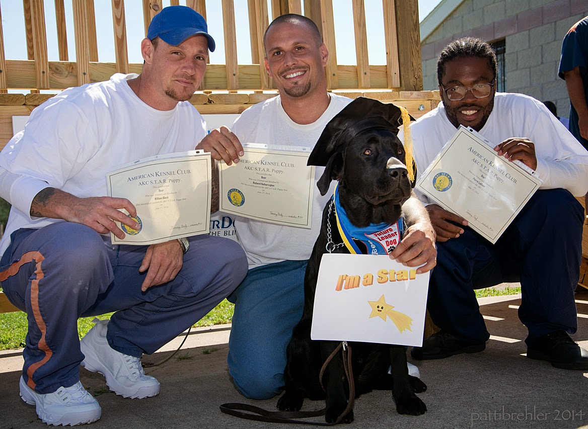 "Three men are squatting in a row, all are wearing blue prison pants and white t-shirts, the man on the left is wearing a blue baseball cap. the men are holidng up certificates and smiling at the camera. A young black lab is sitting in front of the middle man with a pained expression on his face. He is wearing a black graduation hat and the blue Future Leader Dog bandana and a medal around his nec. There are wood rails from a staircase behind them. The middle man is also holding a sign in front of the lab that reads, ""I'm a star."""