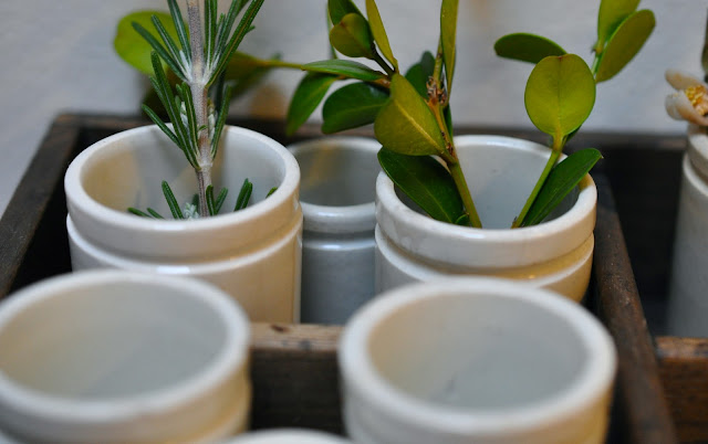 petits pots à pharmacie