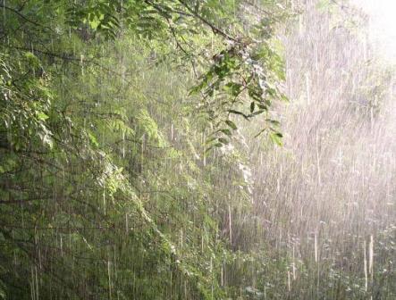 А хочешь, я сегодня буду дождиком?