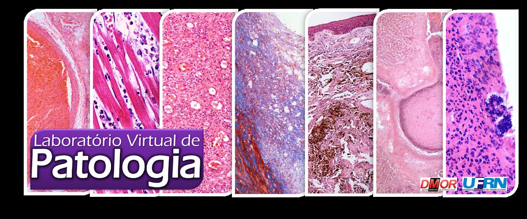 Laboratório Virtual de Patologia/Virtual Laboratory of Pathology
