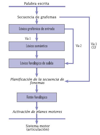 La Fisiología de los Movimientos Oculares   El Blog de Neuro ...