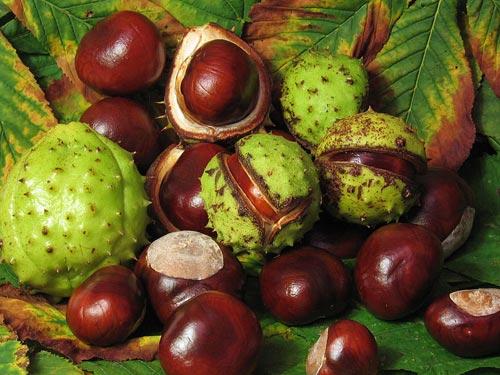 Otra planta medicinal muy utilizada para la circulación es el Ginkgo ...