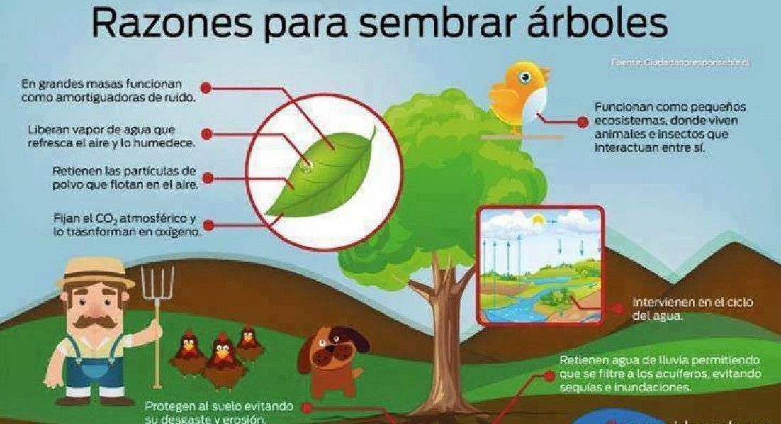 Importancia de los rboles en el ambiente natural place for Plantas de interior limpian aire