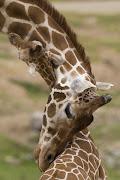 1. Zwierzęta przytulaja sie zwierzeta