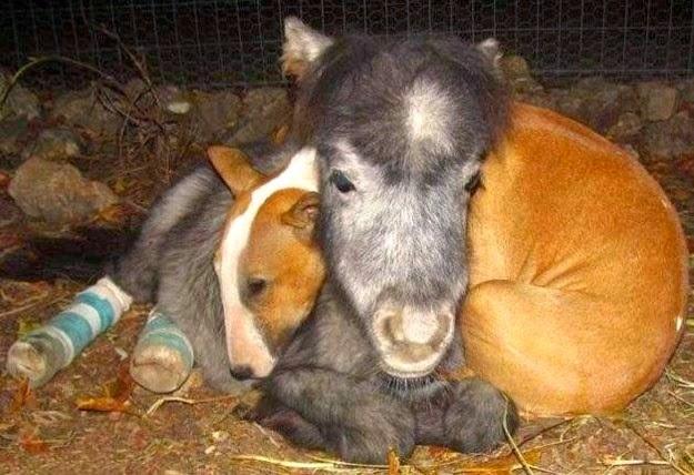 animal-making-love-3