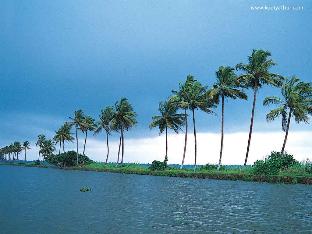 Kerala Nature