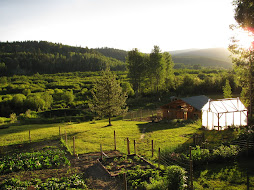Want the Latest Updates on Gardening/Canning/Farming? Check Out Our New Website - Click on the Pic