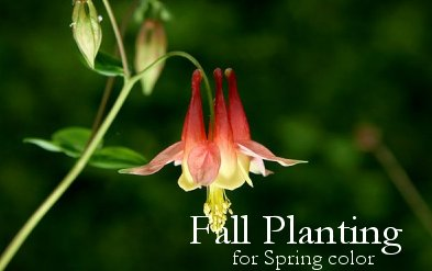Plant Fall Bulbs