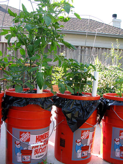 Diy earth boxes from 5 gallon buckets square pennies for Gardening 5 gallon bucket