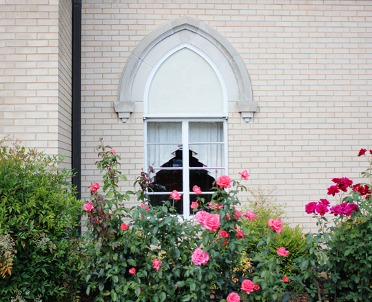 Pink roses in front of a church window