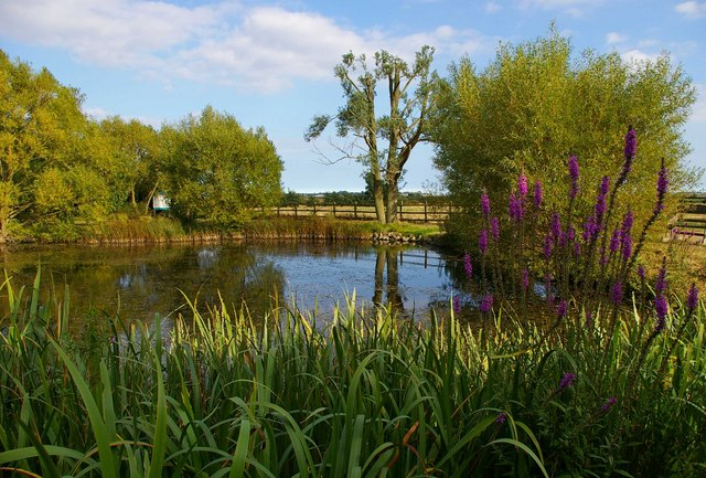How to make a wildlife pond garden how - Build pond wildlife haven ...