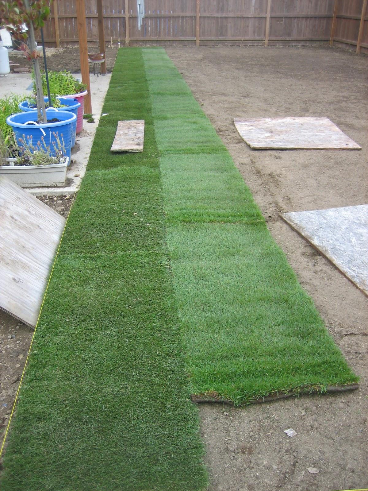 Как сделать хороший опрятный газон на даче своими руками 19