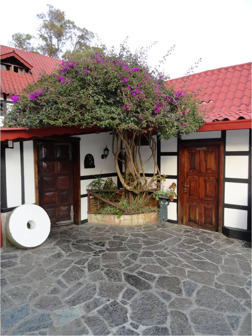 Vida a lo verde living in green feng shui con plantas - Como llenar la casa de energia positiva ...
