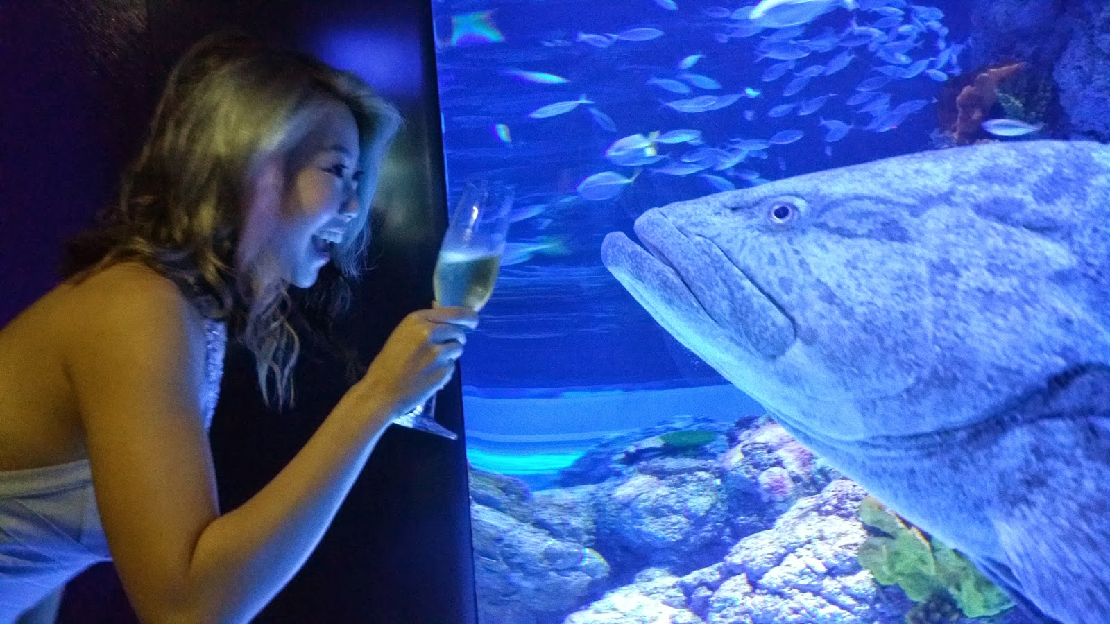 Fish aquarium in johor bahru - The Stroll Towards The Ballroom Will Be Lined With Mini Aquariums And Different