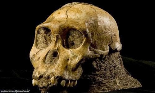 Penyelidik Temui Kulit Manusia Yang Dikatakan Tertua dan Berusia 2 Juta Tahun