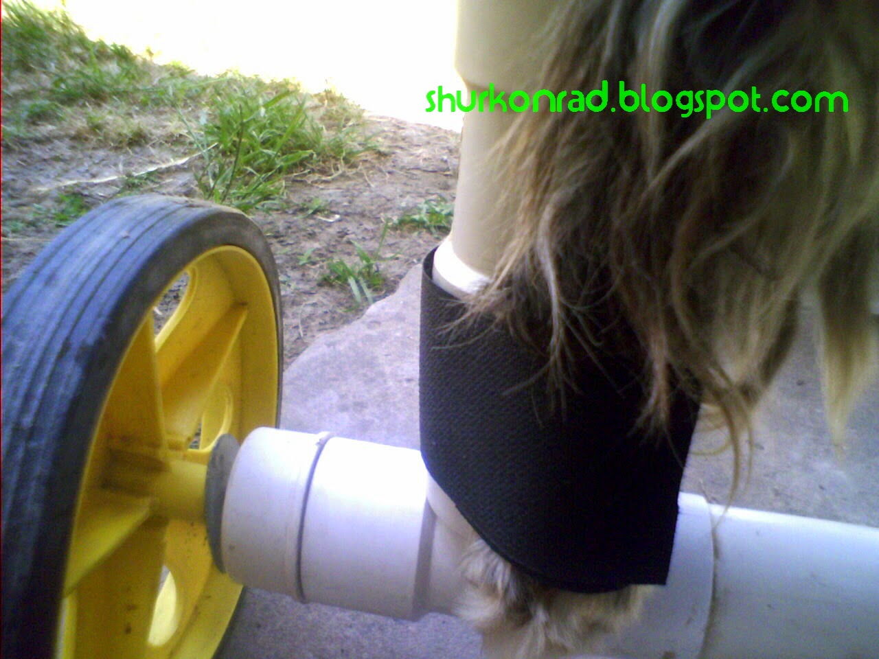 ShurKonrad perro silla ruedas dog 28
