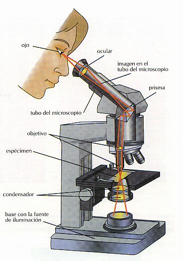 El microscopio ciencias naturales for Cual es el compuesto principal del marmol