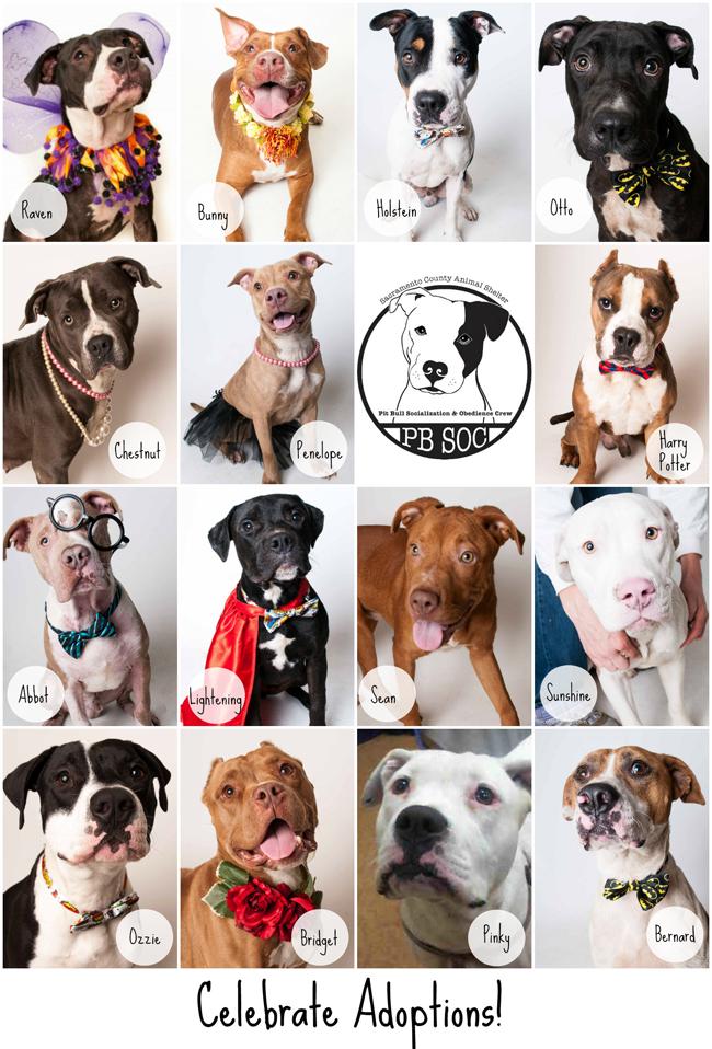 Raise Your Paw_PBSOC_Adoptions 11.23.15