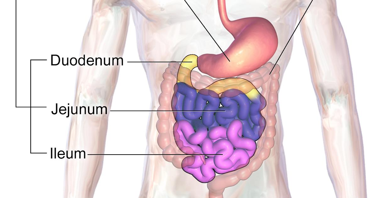 Atemberaubend Armvene Anatomie Iv Bilder - Anatomie und Physiologie ...