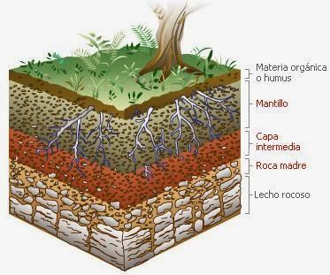 El suelo como ecosistema con ciencia for A que se denomina suelo