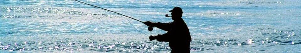Cần Câu Cá | Máy Câu Cá | Túi Đựng Cần Câu Cá