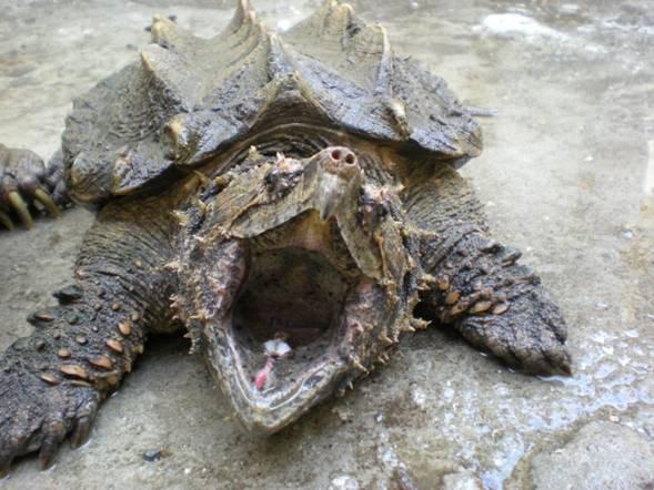 reptiles sorprendentes
