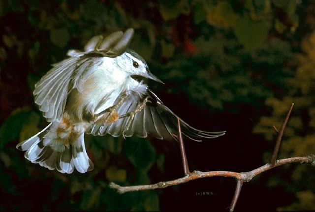 நான் பார்த்து ரசித்த புகைப்படங்கள் சில.... - Page 2 Flying+Birds+%252816%2529