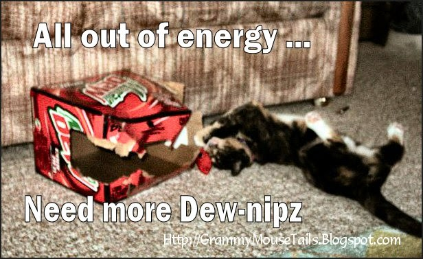 cat tired wants mountain dew energy funny photo
