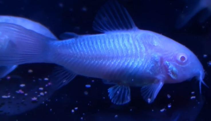 Open bottom fish tank
