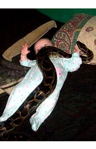 bayi dililit ular